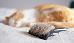 Tips and Tricks for Grooming Your Cat
