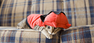 A cat wearing a cute outfit.