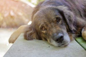 seizure disorder in dogs