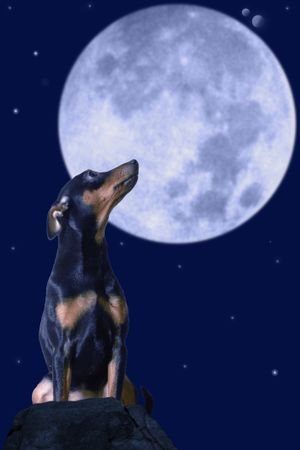 how does the moon affect your pet