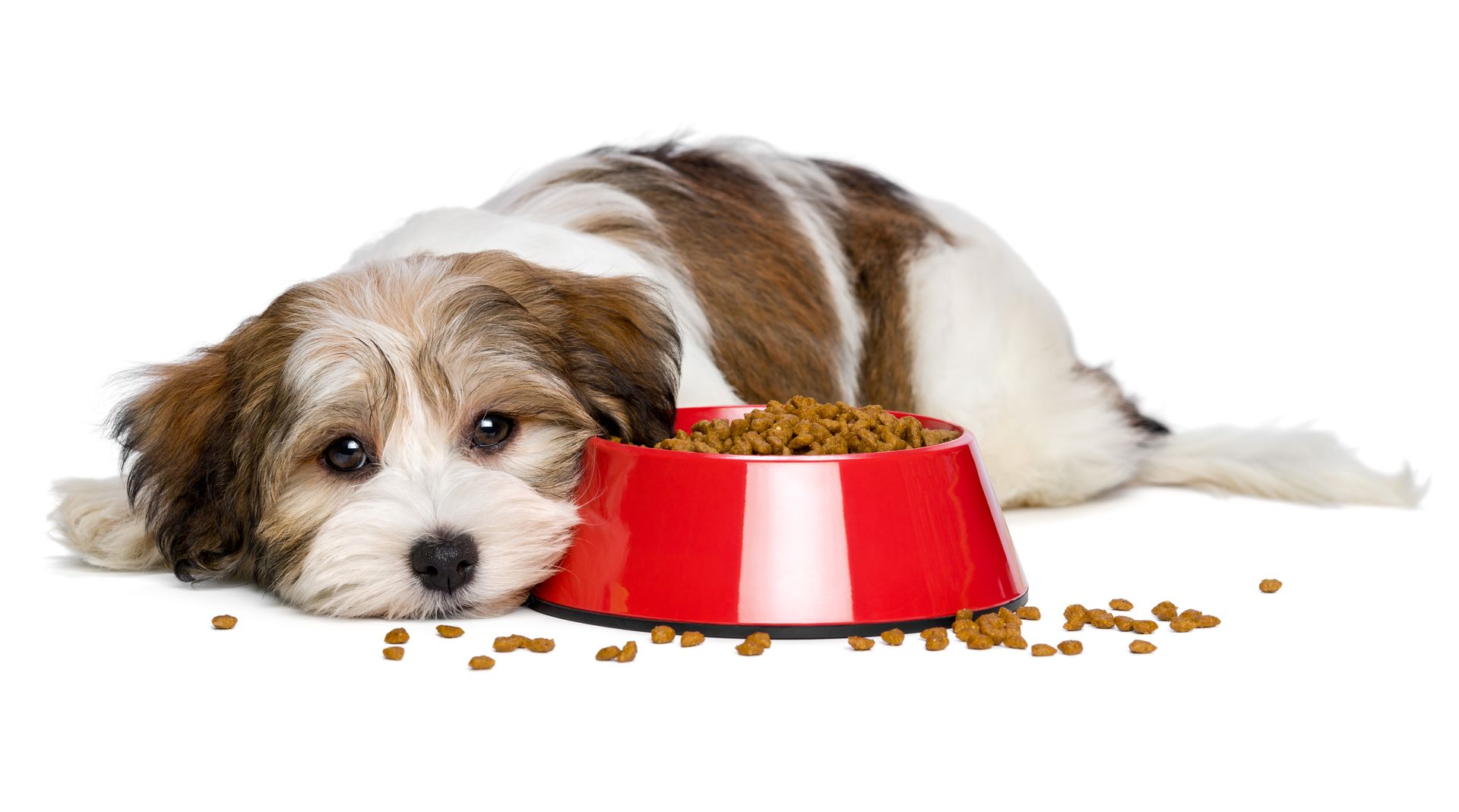 Home Care For The Dog That Won T Eat
