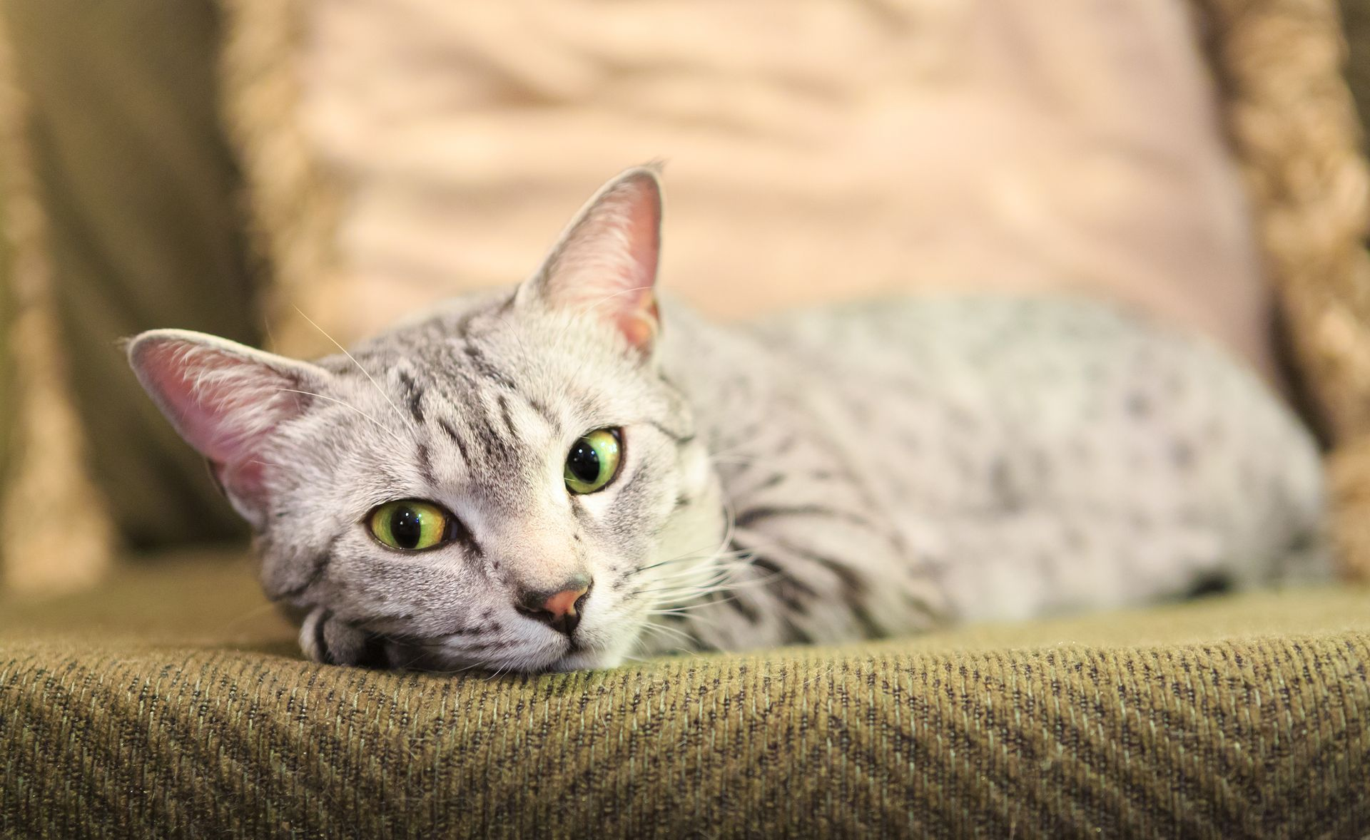 Home Care for the Cat with Vomiting and Diarrhea