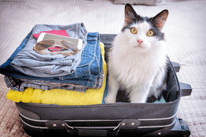 A cat stands in its owner's packed suitcase, ready for a trip.