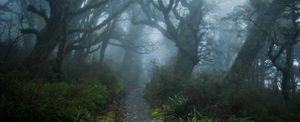 A misty path through the woods.
