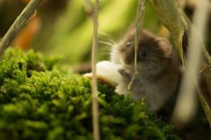 A hamster lounges in a lush, green setting.