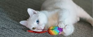 A cat plays with their favorite toy