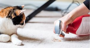 Hacks for Cleaning Up Cat Hairballs