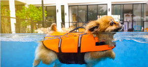 A dog life jacket keeps pups of all sizes safe in the water.