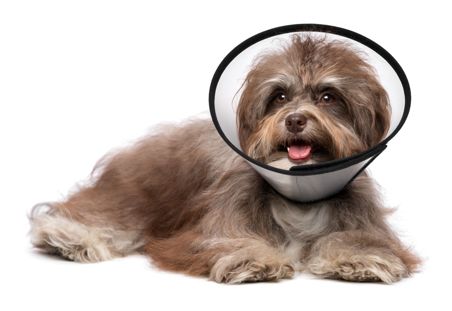 what to expect after neutering a dog