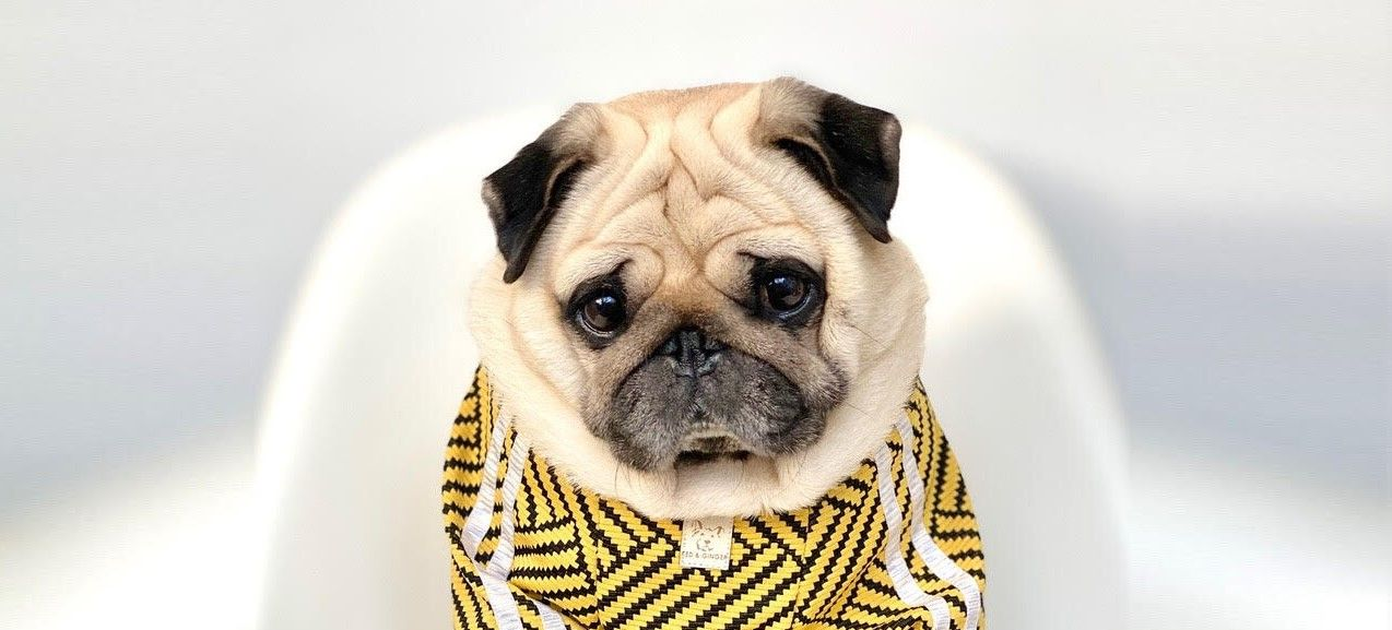 Instagram sensation Puggy Smalls.