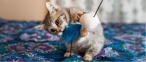 A cat nibbles on its toy.