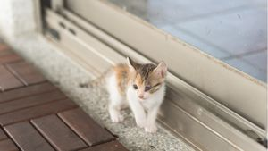 A tiny kitten stands outside a closed door.