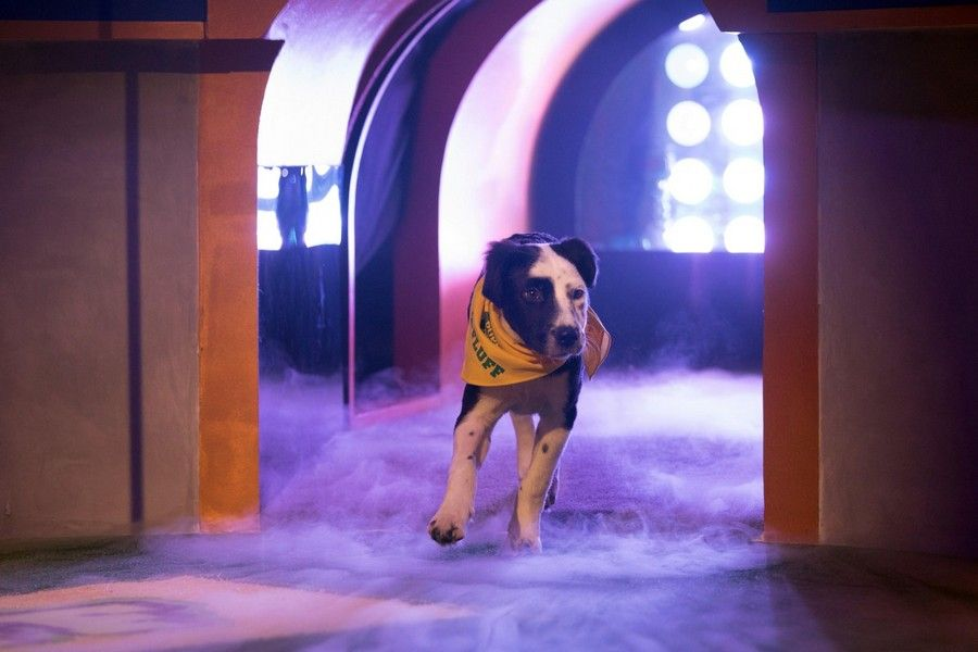 A dog runs onto the playing field at Puppy Bowl 2019.
