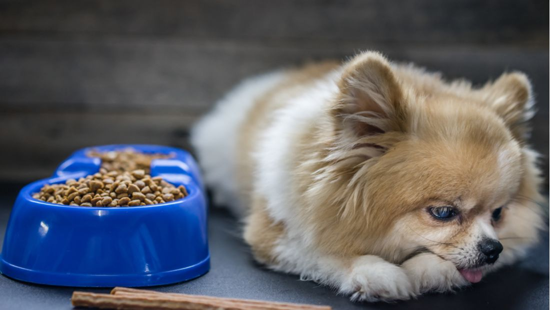 A sad-looking dog lies down next to a full bowl of food.