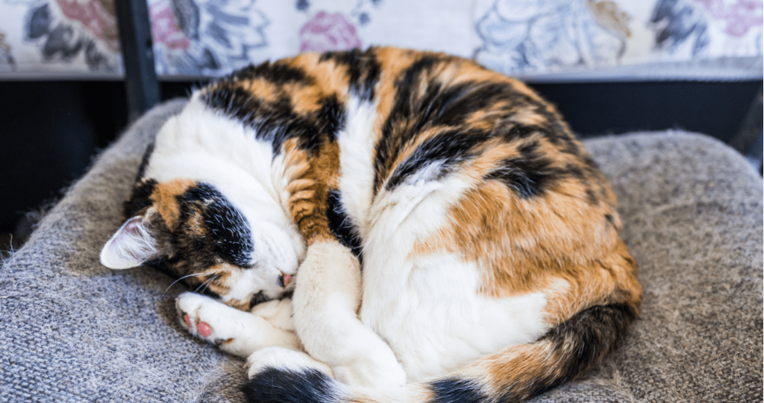 A Calico cat stretches across a tiled floor.