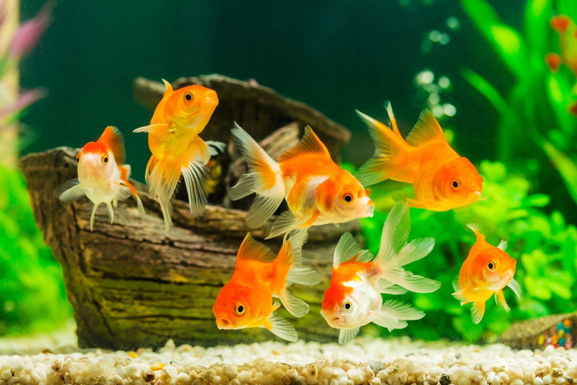 life expectancy of fish