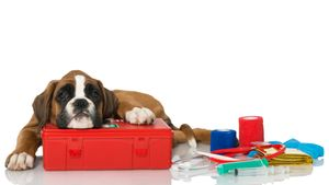 Top 10 First-Aid Tips for Dogs