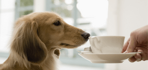 A dog sniffs a cup of coffee.