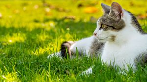 Tips on Cats and Pesticides