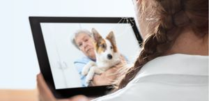 Vet on the pad, conducting a telemedicine visit with a dog.