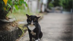 A lonely cat sitting on a sidewalk.