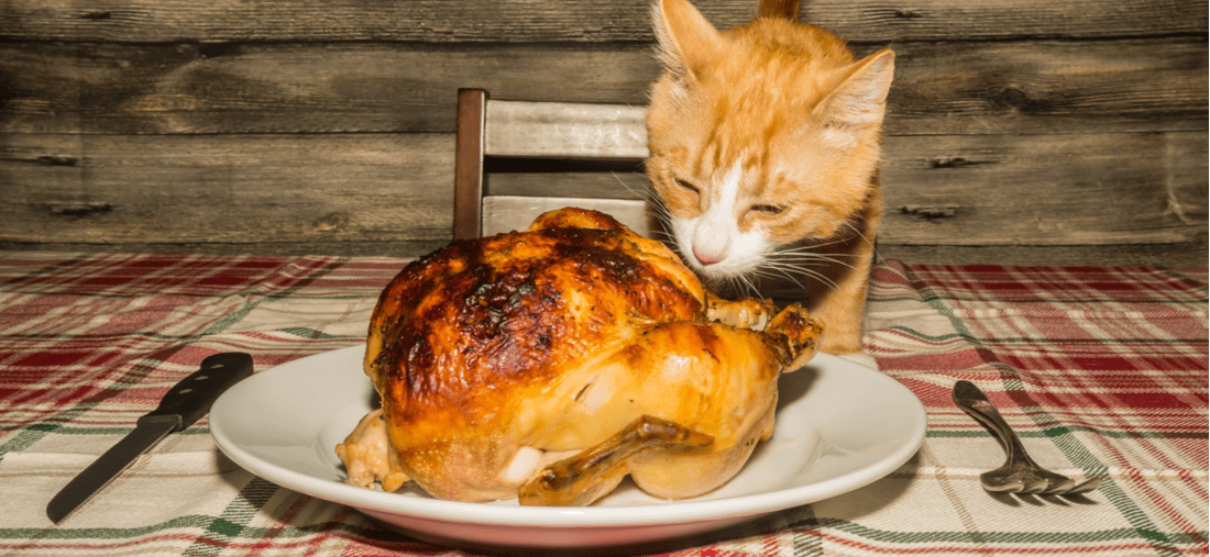 A kitten climbs on the table to take a taste of a Thanksgiving turkey.