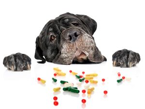 over the counter drugs that are safe for dogs