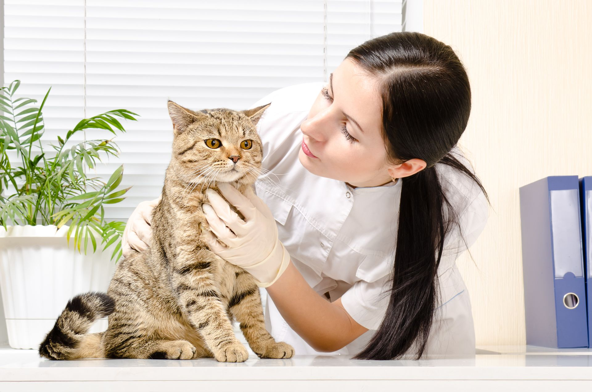 understanding blood work in cats