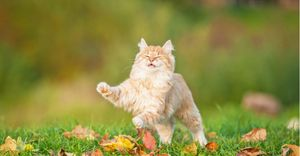 Learn the science behind cats landing on their feet.