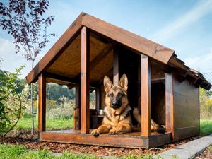 A German Shepard relaxes in a sunlit dog house.
