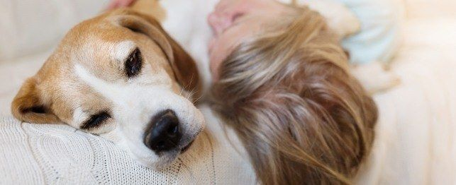 How To Care For Blind And Deaf Senior Dogs