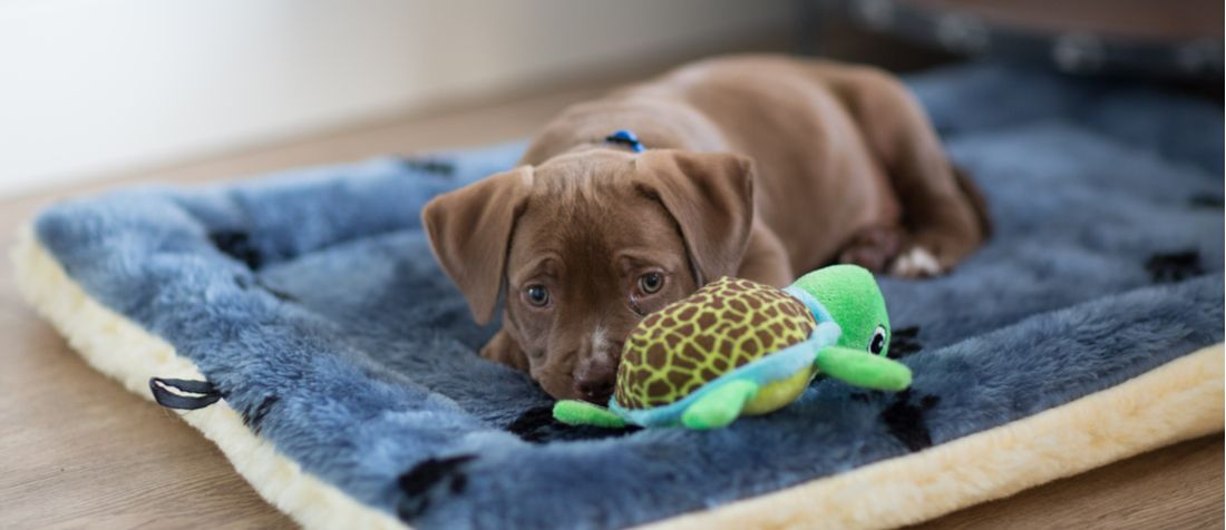 A puppy resting with its turtle toy.