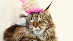 Treatment for hairballs in cats.