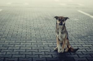 A Stray Dog Looks Sadly Toward the Camera