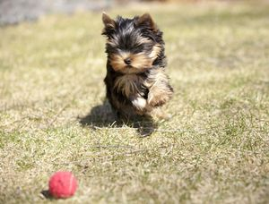 names for playful puppies