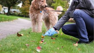 A dog owners cleans up after their leashed dog.